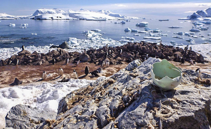Sowohl Pinguinfedern als auch Eierschalen erlauben Einblicke in die Nahrung der Pinguine und wie