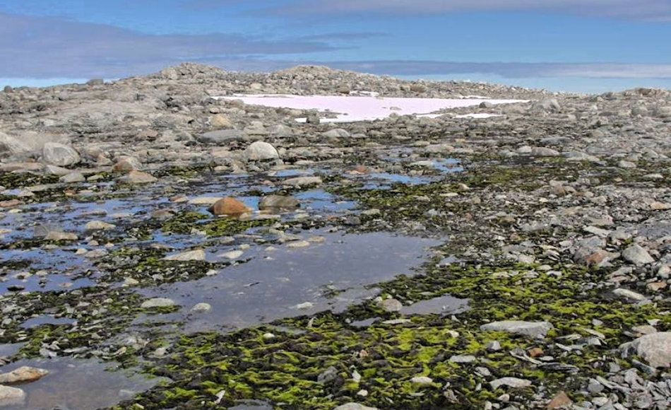 Viele der Bereiche sind durch die starken Winde von Schnee befreit und werden bei der Schneeschmelze mit Süsswasser versorgt. Im Laufe der letzten Jahrzehnte sind aber auch hier die Schneemengen gesunken. Bild: Sharon Robinson / AAD