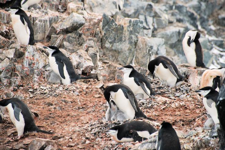 Die Zahlen der Pinguine und vieler anderer Seevögel sind in den letzten 40 Jahren zwischen 25 und
