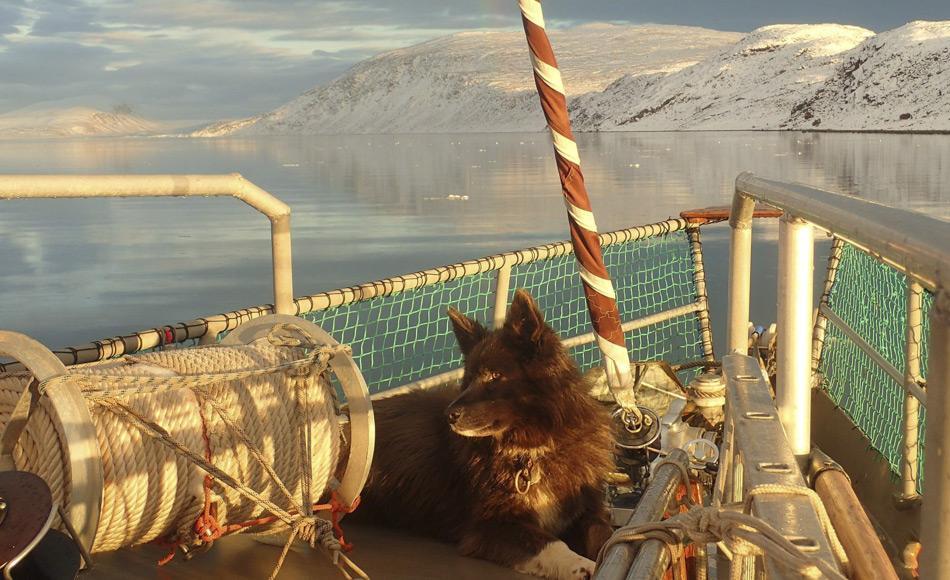 Sieben Schlittenhunde befanden sich ebenfalls an Bord der Arktika. Sie sollten für die Schlittenreise bis zum Nordpol eingesetzt werden. Bild: Arktika/Facebook